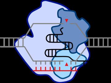 Sidi Chen Lab